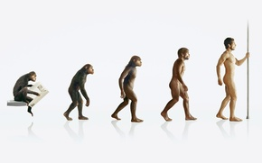 Picture people, monkey, evolution