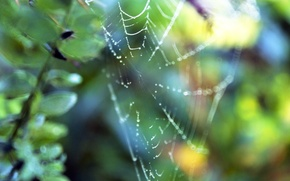 Picture grass, drops, macro, nature, Rosa, plants, web, spider, branch