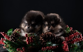 Wallpaper new year, puppies, two, Duo, decor, Spitz