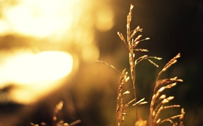 Picture grass, the sun, light, plant, blur, stem, bokeh