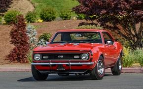 Picture SC 427, Camaro, Yenko, 1969, Chevrolet, Chevrolet, Camaro, COPO