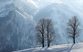 Picture winter, trees, landscape, mountains, the fence