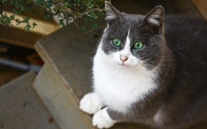 Picture cat, sitting, green-eyed, white-gray