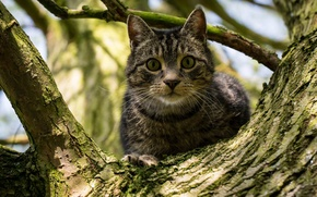 Picture cat, look, on the tree, tree, cat