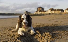 Wallpaper dog, home, the sky, beach, shadow
