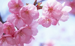 Picture the sky, pink, sakkura