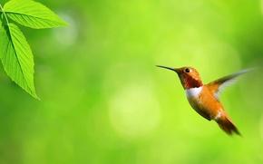 Picture sheet, green, Hummingbird