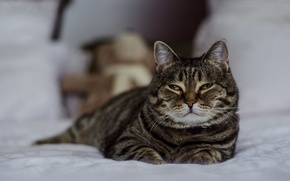 Picture Cat, Cat, Rocky, Beautiful
