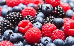 Wallpaper berries, raspberry, blueberries, strawberry, BlackBerry, berries, blueberries, strawberries, blackberries, raspberries