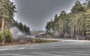 Wallpaper serpentine, road, trees, the bushes, machine, forest, index