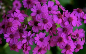 Picture Flowers, purple, flowers, purple
