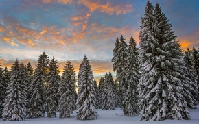 Picture winter, forest, clouds, snow, morning, Switzerland, ate
