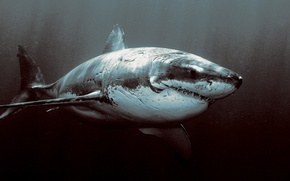 Wallpaper the ocean, shark, horror
