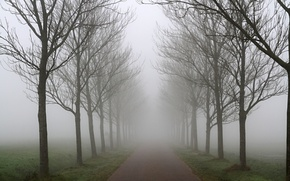 Picture autumn, trees, fog, Road, a number