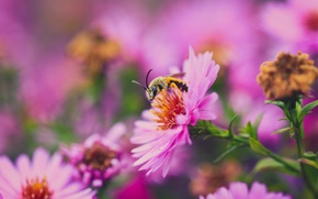 Picture flower, macro, nature, bee