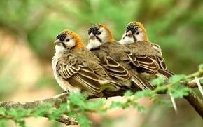 Picture birds, nature, trio