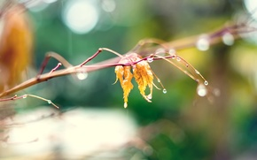 Picture autumn, drops, macro, yellow, nature, leaf, blur, branch, nature