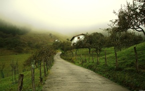 Picture fog, morning, garden, the village
