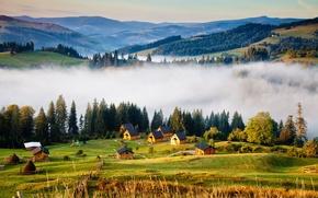 Picture trees, mountains, fog, houses, Ukraine, forest, Carpathians