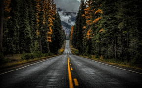 Wallpaper road, autumn, forest, trees, Washington, Washington State, Highway 410