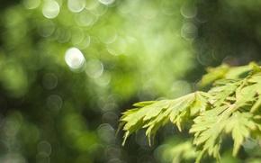 Picture greens, macro, glare, foliage, branch, spring, bokeh