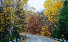 Picture road, forest, Autumn, forest, road, autumn