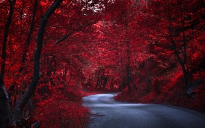 Picture road, trees, nature