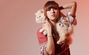 Picture cat, cat, background, model, Asian, Persian cat