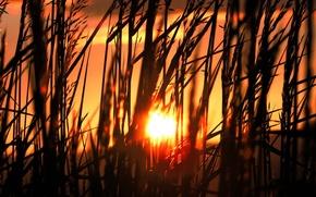 Wallpaper grass, The sun