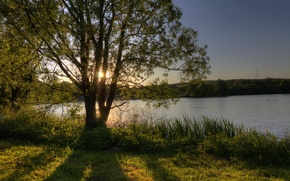 Picture the sky, the sun, rays, lake, tree, shore, Germany, Of Wettenberg, Hesse