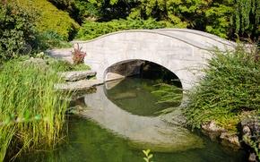 Picture greens, pond, green, plants, Summer, summer, the bridge, bridge, pond