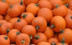 Picture orange, pumpkin, Pumpkins