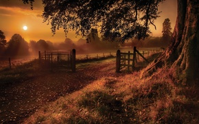 Wallpaper earth, rays, nature, fog, grass, trees, glare, leaves, tree, the fence, trunk, the sun, the ...