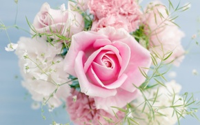 Picture Pink rose, flowers, flowers, beautiful, beautiful, Pink rose