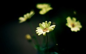 Picture flowers, yellow, green, background, widescreen, Wallpaper, blur, wallpaper, flowers, flower, widescreen, background, full screen, HD …
