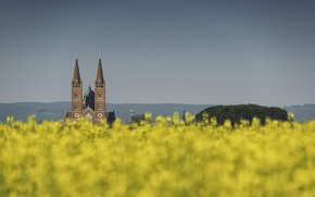 Picture cathedral, flowers, bokeh, spring, Croatia, towers, sunny, field of gold, Djakovo