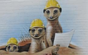 Picture wall, graffiti, meerkats