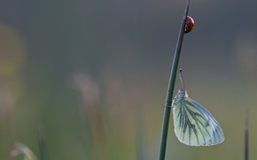 Picture macro, insects, butterfly, ladybug, stem, Wallpaper from lolita777