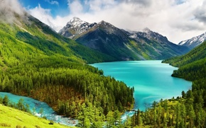 Picture forest, mountains, Russia, The Altai Mountains, The Kucherla lake