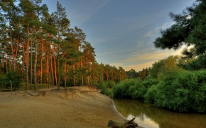 Picture forest, the sky, trees, sunset, river, shore