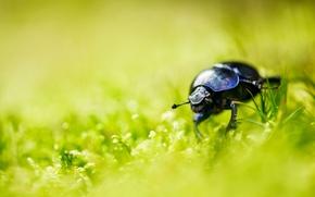 Picture summer, grass, beetle, bokeh