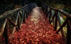 Picture autumn, leaves, bridge