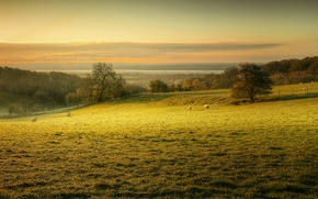 Wallpaper sheep, morning, dawn, pasture