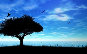 Wallpaper sea, the sky, tree, shadow, birds
