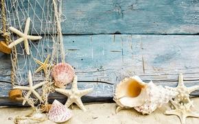 Picture marine, beach, seashells, beach, shell, sand, sand, starfishes, wood