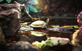 Picture water, pond, animal, magic, cute, turtle, beauty, zoo, zoo, Bug