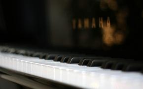 Picture macro, piano, macro, plan