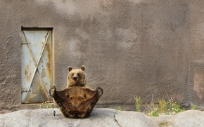 Wallpaper BACKGROUND, POSE, WALL, The DOOR, BEAR, PAWS