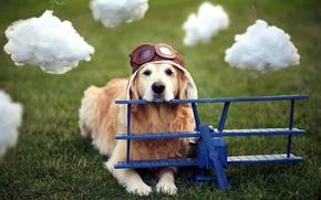 Picture dog, helmet, the plane