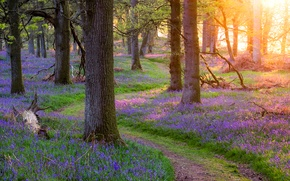 Picture forest, grass, trees, flowers, spring, Scotland, path